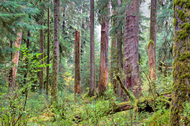 Πράσινο δασικό τοπίο στοκ εικόνες