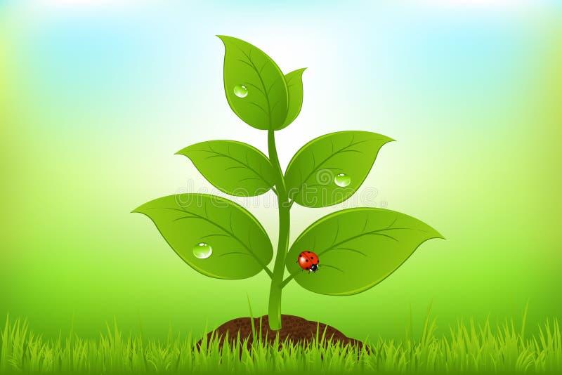 πράσινο διάνυσμα νεαρών βλ&a διανυσματική απεικόνιση