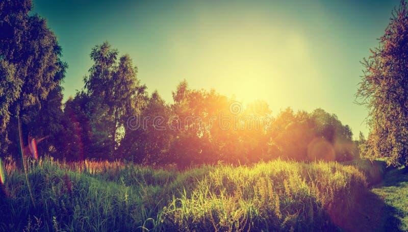 Πράσινο ηλιόλουστο τοπίο, πανόραμα επαρχίας Τρύγος στοκ εικόνες