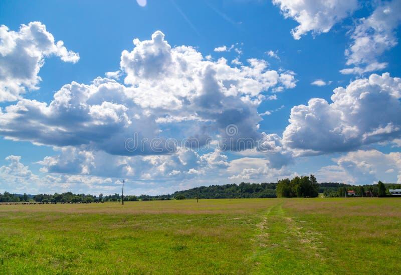 Πράσινο λιβάδι κάτω από τον ουρανό με τα σύννεφα στοκ εικόνες