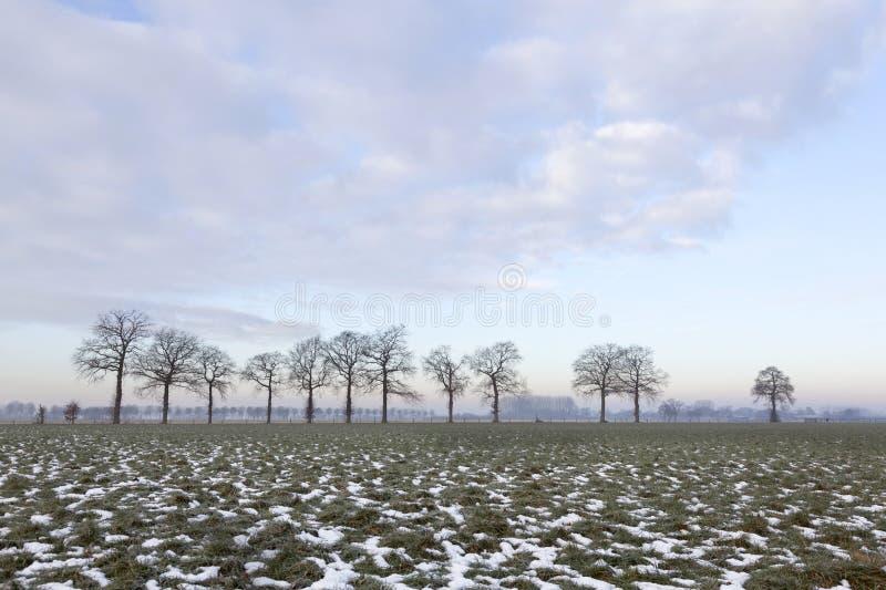 Πράσινο λιβάδι με τα μπαλώματα της γραμμής χιονιού και δέντρων κοντά στο Wageningen στοκ φωτογραφία
