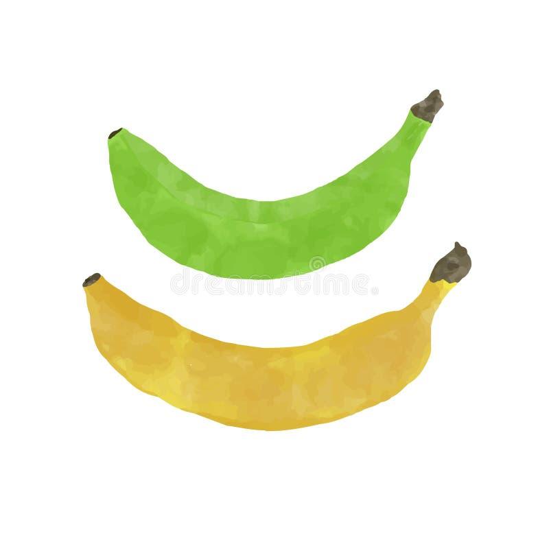 Πράσινο και κίτρινο χρώμα watercolor μπανανών στοκ φωτογραφίες