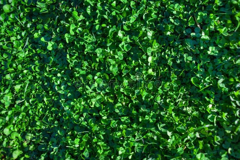 Πράσινο κατασκευασμένο υπόβαθρο χλόης Τομέας της θερινής χλόης, horizont διανυσματική απεικόνιση