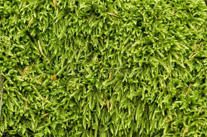 Πράσινο κατασκευασμένο φυσικό υπόβαθρο χλόης βρύου στοκ εικόνα με δικαίωμα ελεύθερης χρήσης