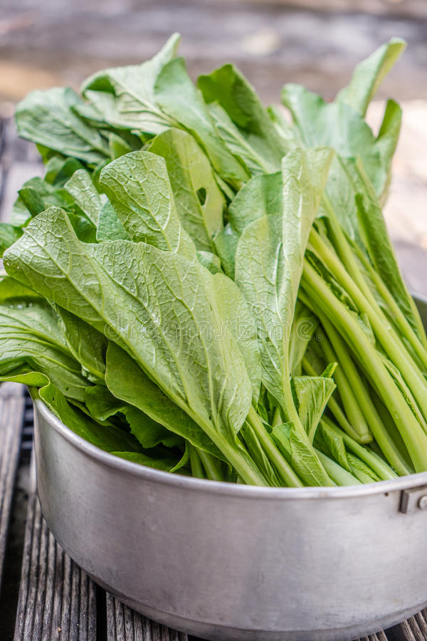 πράσινο κατσαρό λάχανο στοκ εικόνες με δικαίωμα ελεύθερης χρήσης