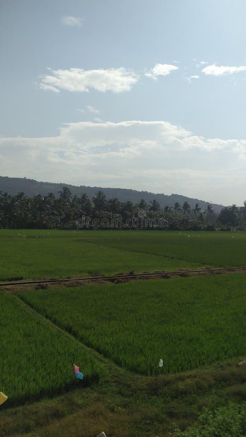 Πράσινο Κεράλα στοκ εικόνες