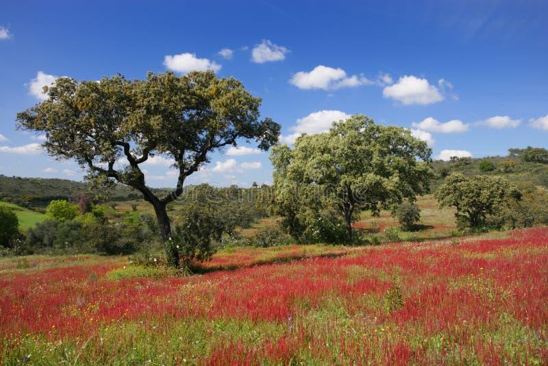 πράσινο κόκκινο τοπίο στοκ εικόνα με δικαίωμα ελεύθερης χρήσης