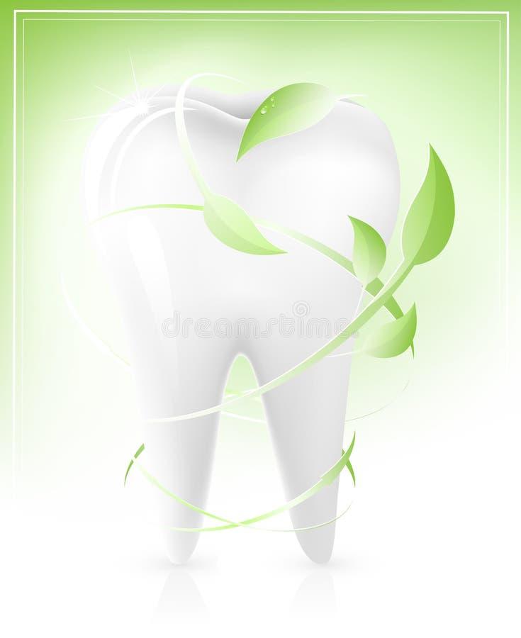 πράσινο λευκό δοντιών φύλ&lambd διανυσματική απεικόνιση