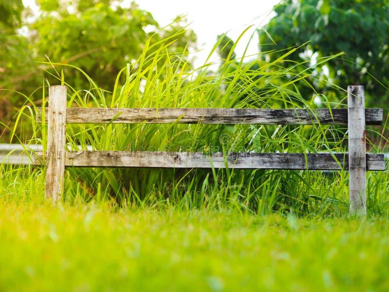 Πράσινο λιβάδι με την άσπρη διαρροή στοκ φωτογραφίες