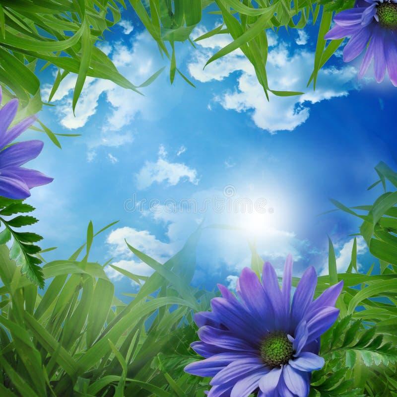 πράσινο λιβάδι στοκ εικόνες με δικαίωμα ελεύθερης χρήσης