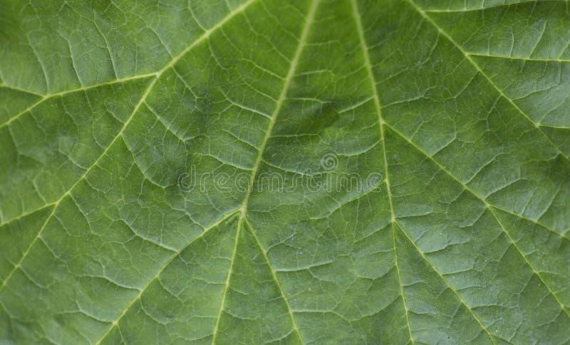 Πράσινο μακρο υπόβαθρο Φρέσκα juicy πράσινα φύλλα του φυτού Μακριά φύλλα στοκ εικόνες