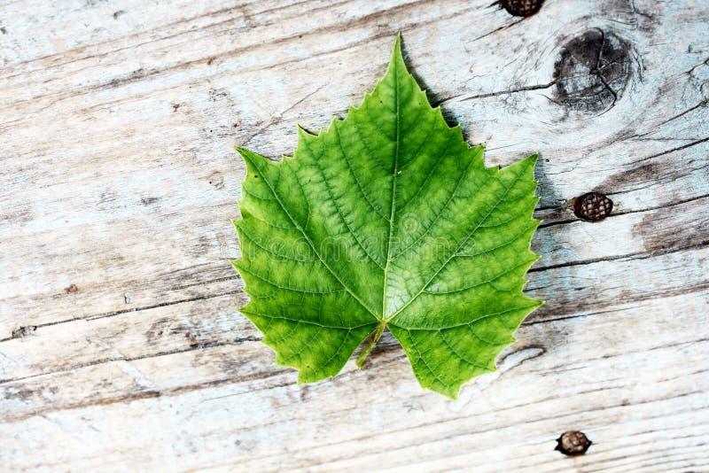 Πράσινο νέο φύλλο σταφυλιών στο παλαιό ξύλινο υπόβαθρο στοκ εικόνα