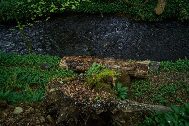 Πράσινο ξύλο δασώδους περιοχής & περικοπών στοκ εικόνα με δικαίωμα ελεύθερης χρήσης