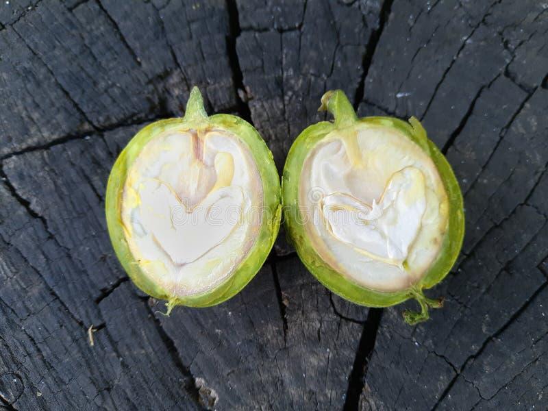 Πράσινο ξύλο καρυδιάς που κόβεται σε δύο μισά στοκ εικόνες