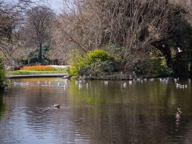 Πράσινο πάρκο του ST Stephen ` s, Δουβλίνο, Ιρλανδία: λίμνη και οι κήποι πέρα στοκ εικόνες με δικαίωμα ελεύθερης χρήσης