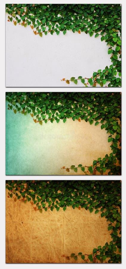 πράσινο παλαιό φυτό εγγράφ&omi στοκ φωτογραφία με δικαίωμα ελεύθερης χρήσης