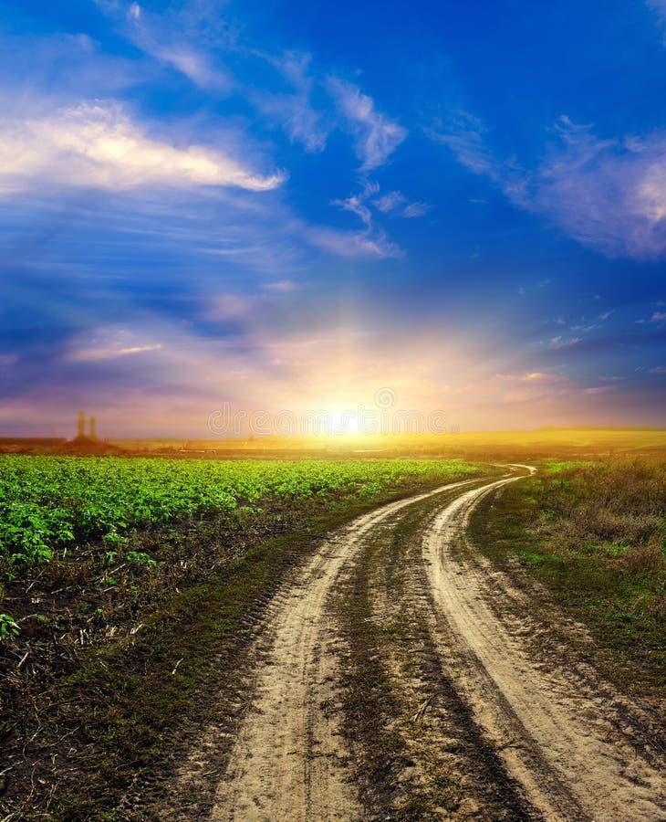 Πράσινο πεδίο του σίτου, του μπλε ουρανού και του ήλιου, άσπρα σύννεφα. χώρα των θαυμάτων στοκ φωτογραφία με δικαίωμα ελεύθερης χρήσης