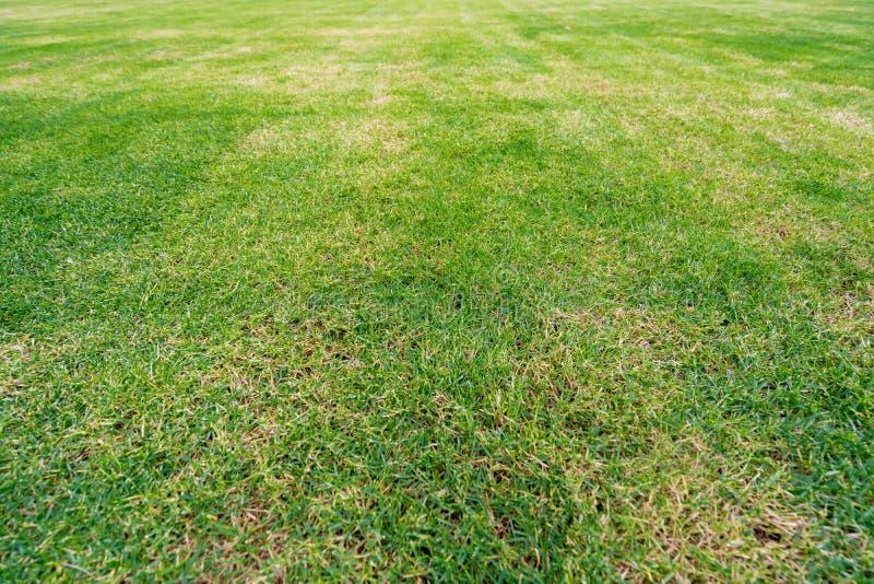Πράσινο πεδίο χλόης στοκ φωτογραφίες με δικαίωμα ελεύθερης χρήσης