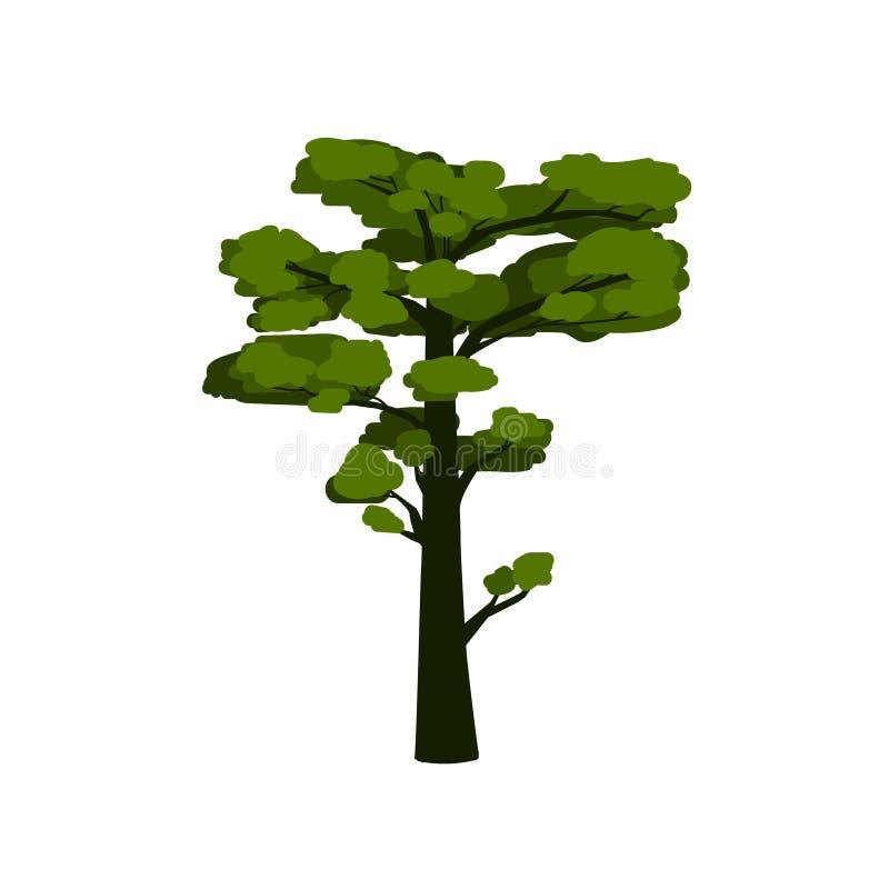 Πράσινο πεύκο-δέντρο, τυποποιημένο δέντρο κωνοφόρων για το σχέδιό σας απεικόνιση αποθεμάτων