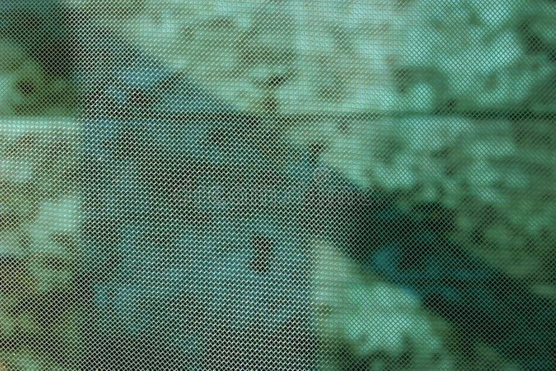 πράσινο πλέγμα στοκ φωτογραφία με δικαίωμα ελεύθερης χρήσης