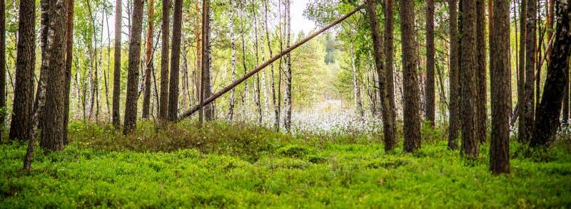 Πράσινο πλούσιο δάσος ελών στοκ εικόνες