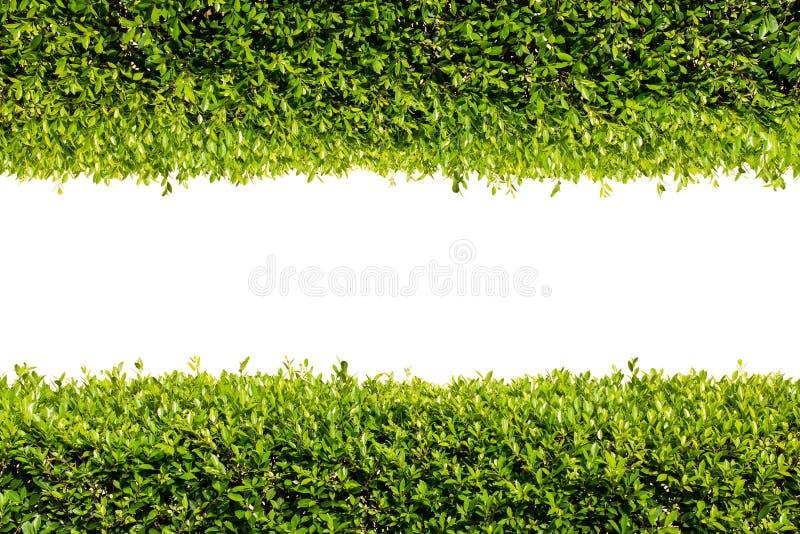 Πράσινο πλαίσιο θάμνων στοκ φωτογραφία
