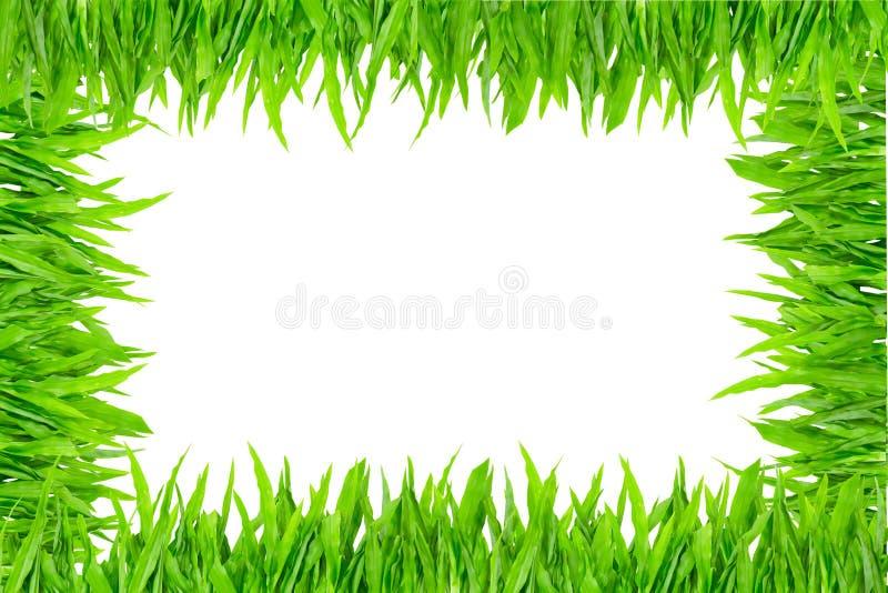 Πράσινο πλαίσιο χλόης στην άσπρη ανασκόπηση στοκ φωτογραφία με δικαίωμα ελεύθερης χρήσης
