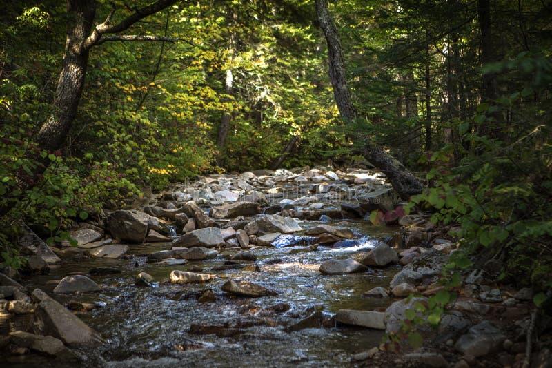 Πράσινο ρεύμα νερού βουνών στοκ εικόνα με δικαίωμα ελεύθερης χρήσης