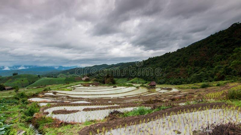 πράσινο ρύζι πεδίων terraced στοκ φωτογραφία