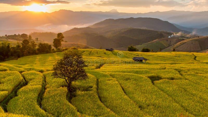 πράσινο ρύζι πεδίων terraced στοκ εικόνα με δικαίωμα ελεύθερης χρήσης