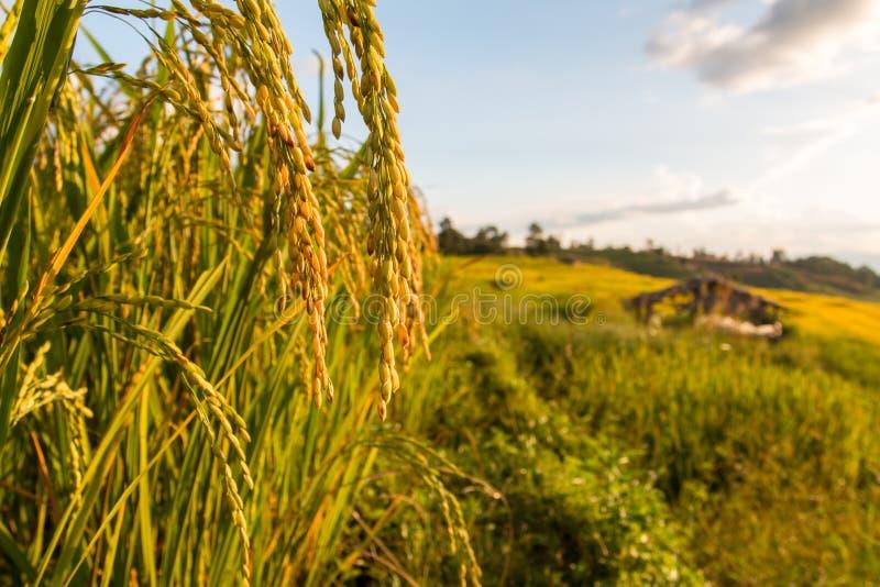 πράσινο ρύζι πεδίων terraced στοκ φωτογραφία με δικαίωμα ελεύθερης χρήσης