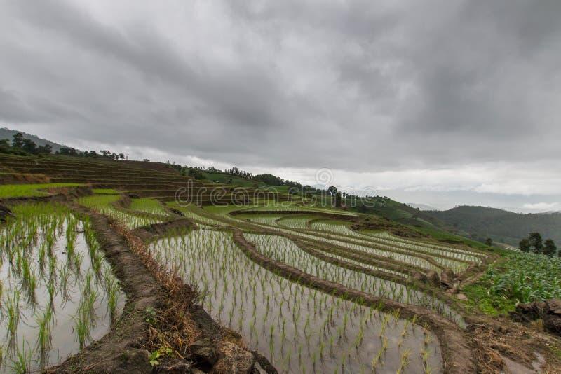 πράσινο ρύζι πεδίων terraced στοκ εικόνες