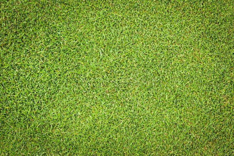Πράσινο σκηνικό γκολφ στοκ φωτογραφία