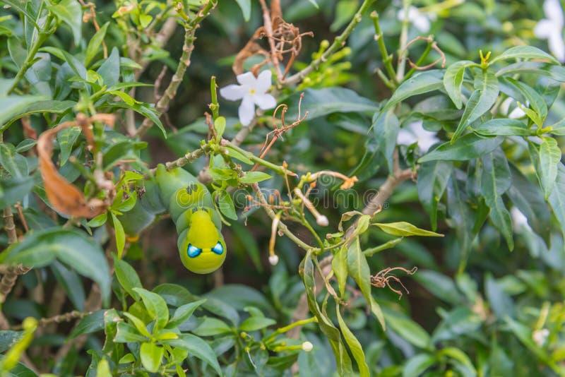 πράσινο σκουλήκι στο φύλλο δέντρων στοκ εικόνες