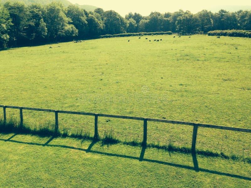 Πράσινο σπάσιμο μεσοβδόμαδου τομέων στοκ φωτογραφίες με δικαίωμα ελεύθερης χρήσης