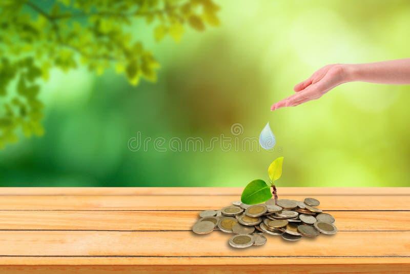Πράσινο σπαρτοκάρισμα που ποτίζεται με το χέρι και μεγαλώνει πάνω σε στοίβα κερμάτων με πράσινα δέντρα και φως του ήλιου στο παρα στοκ εικόνες με δικαίωμα ελεύθερης χρήσης