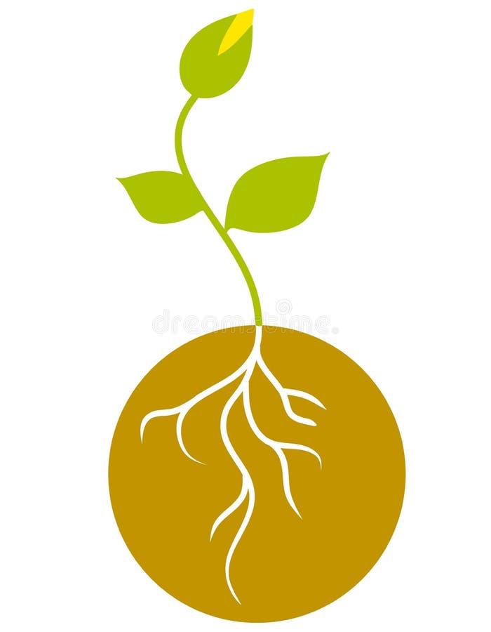 πράσινο σπορόφυτο ριζών ελεύθερη απεικόνιση δικαιώματος