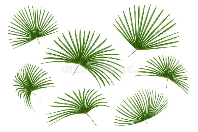 Πράσινο σχέδιο φύλλων, φοίνικας φύλλων που απομονώνεται στο άσπρο υπόβαθρο στοκ εικόνες