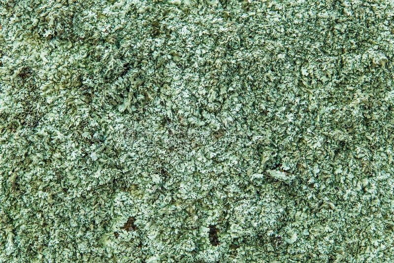 Πράσινο σχέδιο σύστασης υποβάθρου αλγών αλγών στοκ εικόνα με δικαίωμα ελεύθερης χρήσης