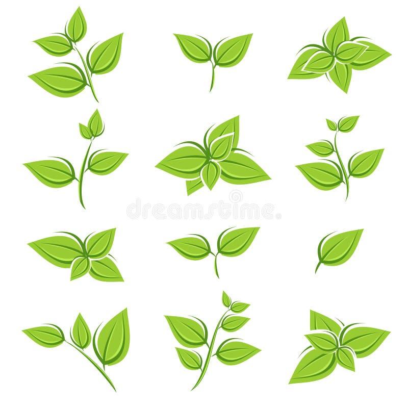 Πράσινο σύνολο συλλογής φύλλων τσαγιού διάνυσμα διανυσματική απεικόνιση