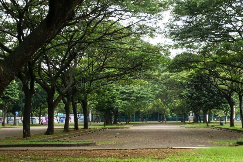 Πράσινο τοπίο στο πάρκο πόλεων με τα μεγάλες δέντρα, τη χλόη και τη διάβαση στην κεντρική φωτογραφία που λαμβάνεται στην Τζακάρτα στοκ φωτογραφίες με δικαίωμα ελεύθερης χρήσης