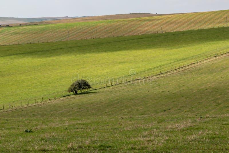 Πράσινο τοπίο του Σάσσεξ στοκ εικόνες