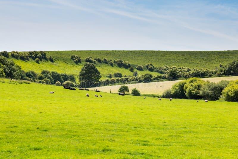 πράσινο τοπίο στοκ εικόνα
