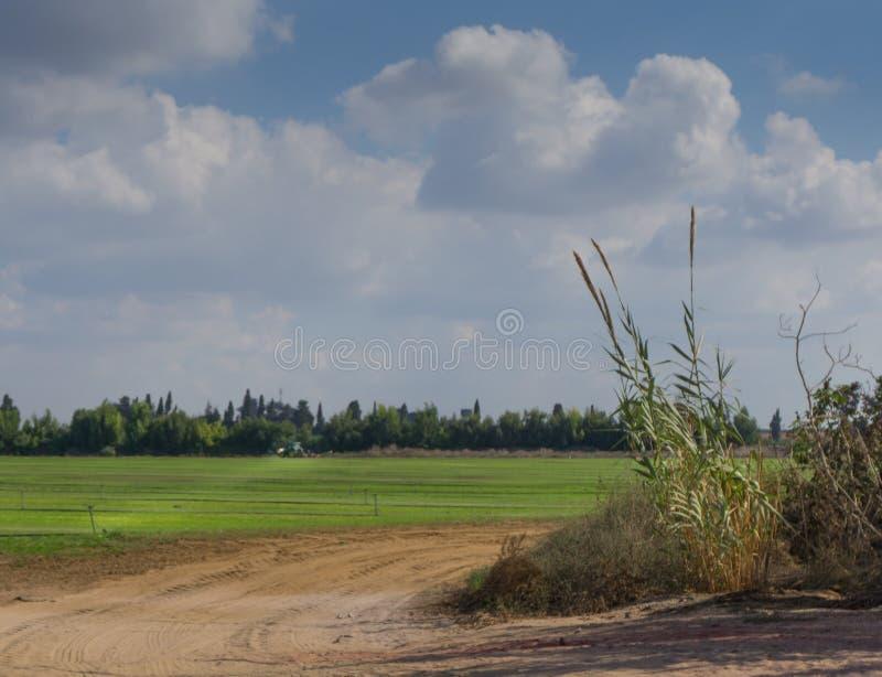 Πράσινο τρακτέρ που κόβει το λιβάδι και που ψεκάζει νέες τις συγκομιδές, Ισραήλ στοκ φωτογραφία