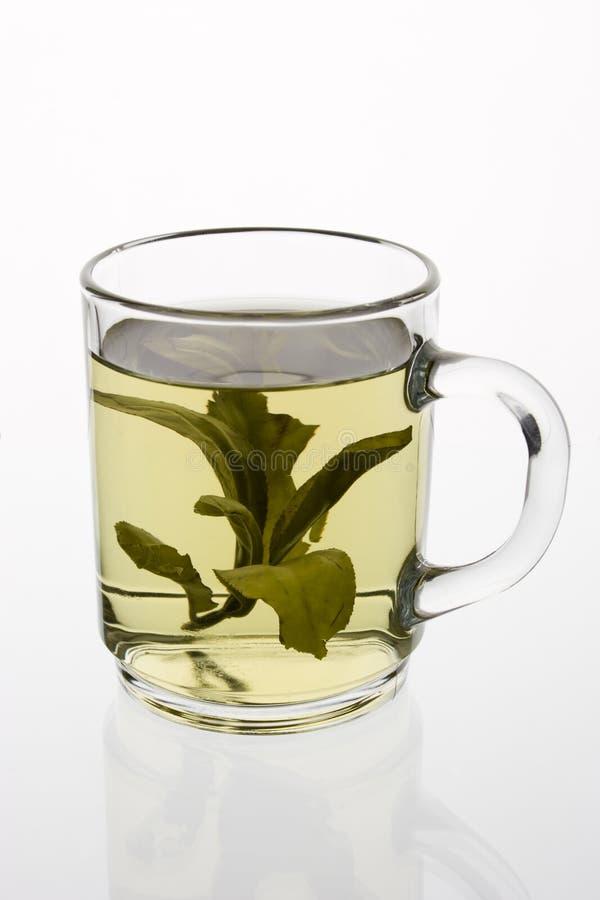 πράσινο τσάι γυαλιού στοκ εικόνα