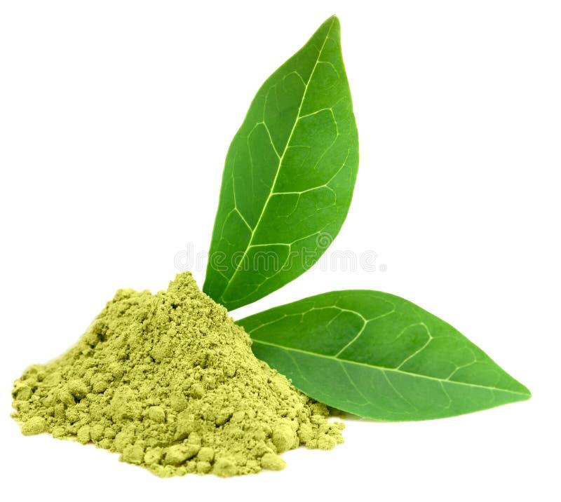 πράσινο τσάι σκονών matcha στοκ εικόνες