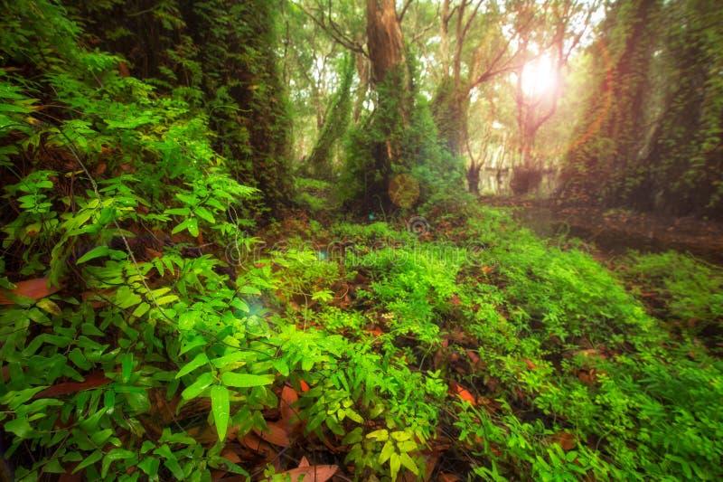 Πράσινο υπόβαθρο δέντρων στο δάσος στοκ φωτογραφίες με δικαίωμα ελεύθερης χρήσης