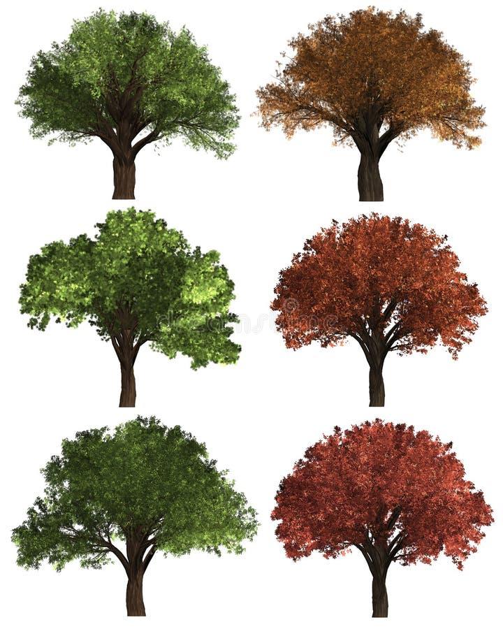 Πράσινο υπόβαθρο δέντρων του Forrest καθορισμένο δέντρο απεικόνισης Το λευκό υποβάθρου απομονώνει στοκ φωτογραφία με δικαίωμα ελεύθερης χρήσης
