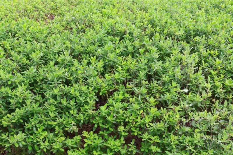 Πράσινο υπόβαθρο δέντρων φύλλων στοκ εικόνες με δικαίωμα ελεύθερης χρήσης