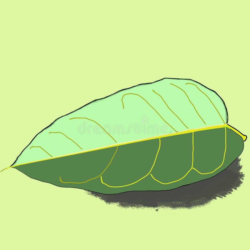 Πράσινο υπόβαθρο εικόνας φύλλων μάγκο στοκ φωτογραφίες με δικαίωμα ελεύθερης χρήσης